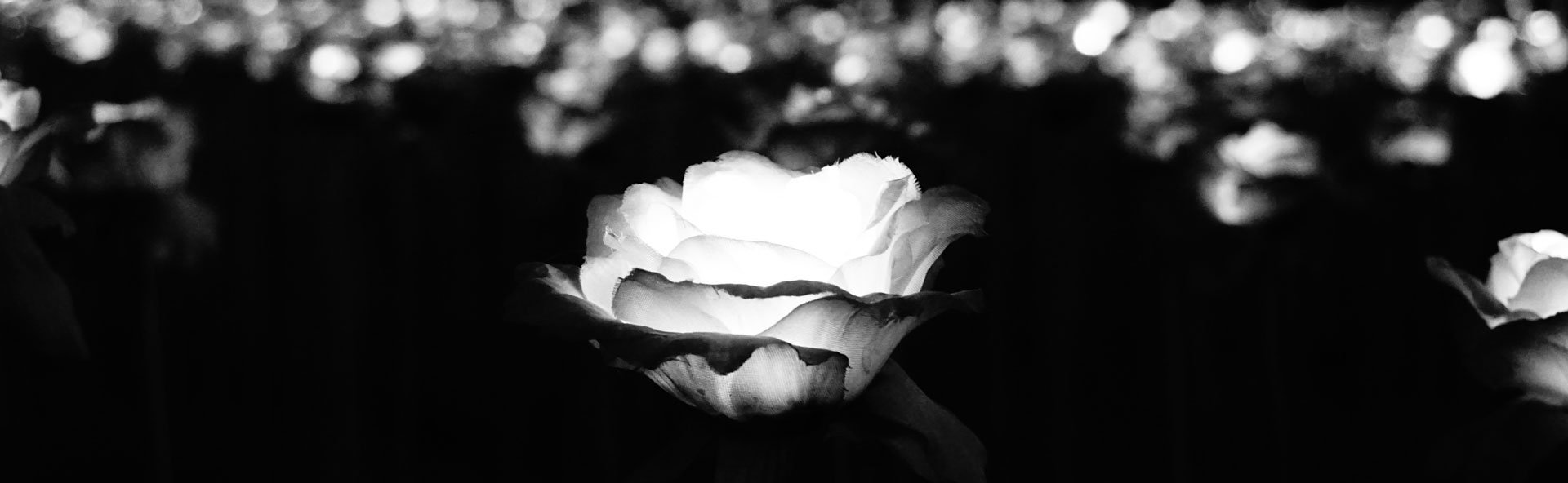 Black and White Photo of Beautiful Flower